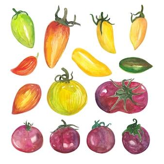 Variações de tomate em aquarela e ingrediente de vegetais de pimenta na cozinha