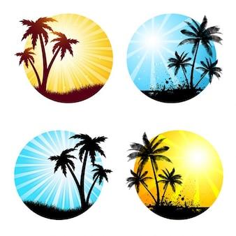 Várias cenas de verão com palmeiras