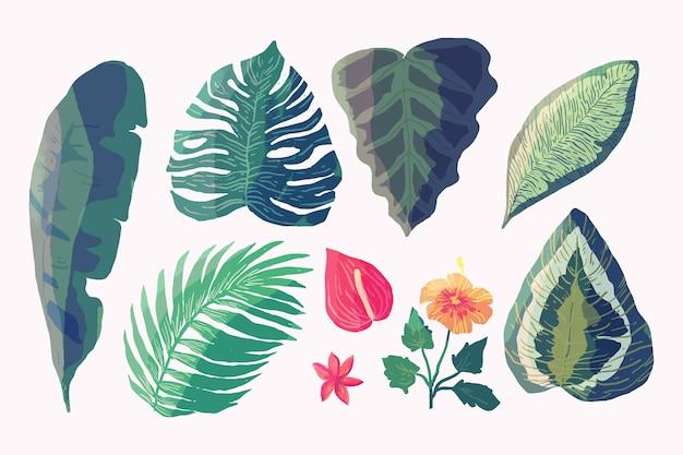 Várias folhas e flores tropicais