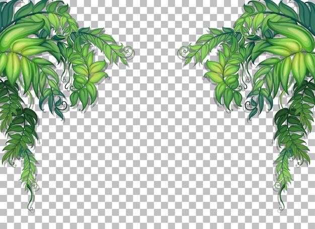 Várias folhas tropicais em fundo transparente