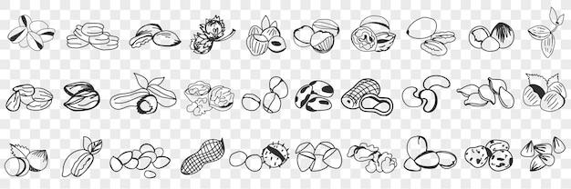 Várias ilustração de conjunto de doodle de nozes comestíveis