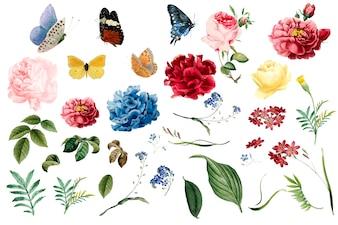 Várias ilustrações de flor e folha românticas