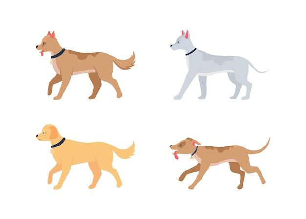 Várias raças de cães conjunto de caracteres plana detalhada. animais domésticos. filhotes ambulantes em coleiras. coleção de desenhos animados isolados de cuidados com animais de estimação