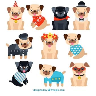 Variedade colorida de pugs engraçados