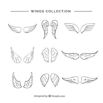 Variedade de asas desenhadas à mão