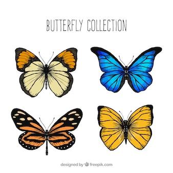Variedade de borboletas decorativas