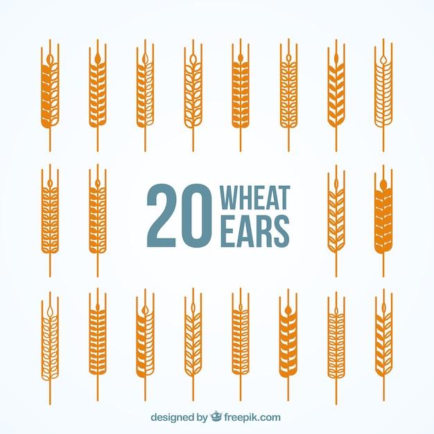 Variedade de espigas de trigo