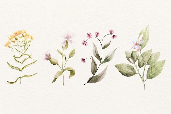 Variedade de flores de botânica vintage