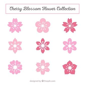 Variedade de flores de cerejeira