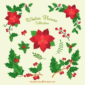 Variedade de flores de natal e visco