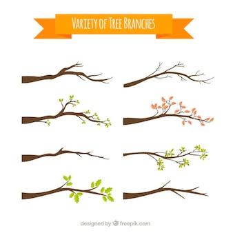 Variedade de galhos de árvores