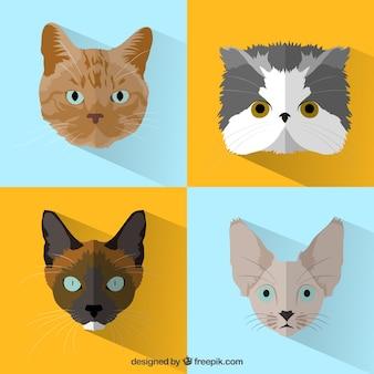 Variedade de gatos