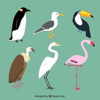 Variedade de pássaros