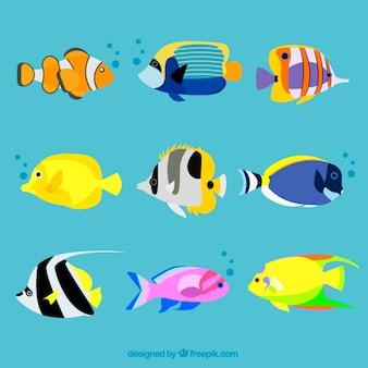 Variedade de peixes exóticos
