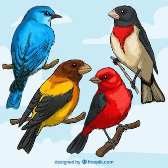 Variedade de raças de aves