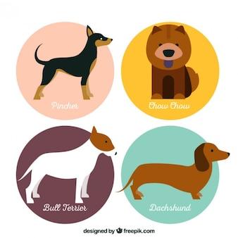 Variedade de raças de cães bonitos