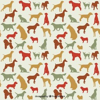 Variedade de raças de cães