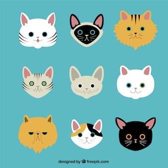 Variedade de raças de gatos
