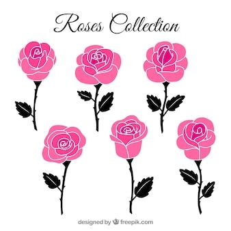 Variedade de rosas decorativas