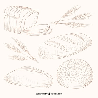 Variedade esboços de pães