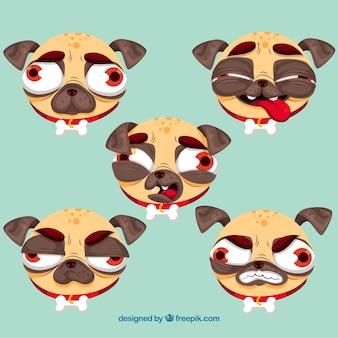 Variedade original de pugs feios