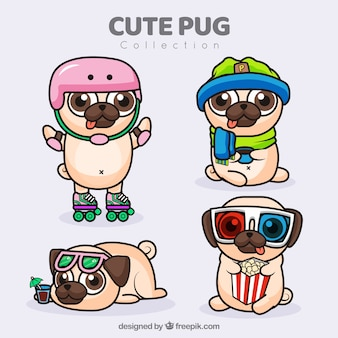 Variedade plana de pugs divertidos