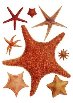 Variedades de estrelas do mar