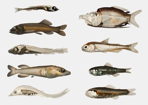 Variedades de peixe
