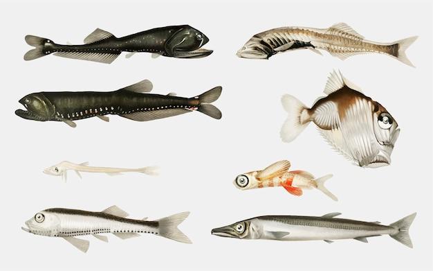 Variedades de peixes do fundo do mar