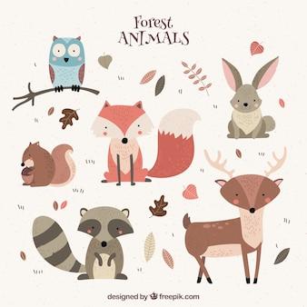 Vários animais selvagens agradáveis