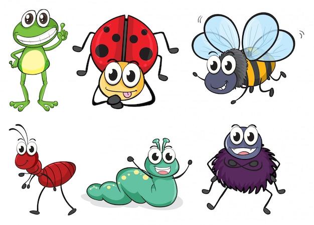 Vários insetos e animais