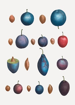 Vários tipos de ameixa