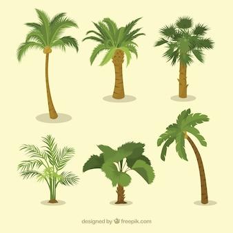 Vários, tipos, palma, árvores