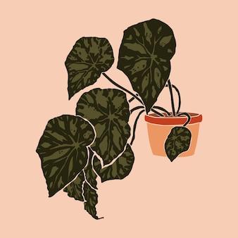 Vaso com planta de begônia bowerae em um estilo minimalista da moda. silhueta de uma planta em um estilo abstrato contemporâneo. colagem de ilustração vetorial. para impressão de camisetas, cartão, pôster, postagem em mídia social