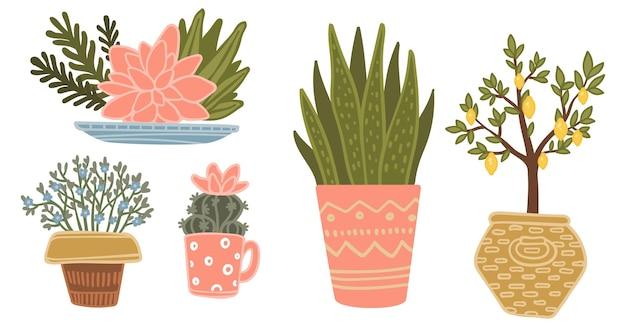 Vasos com plantas em vasos de plantas domésticas florescendo