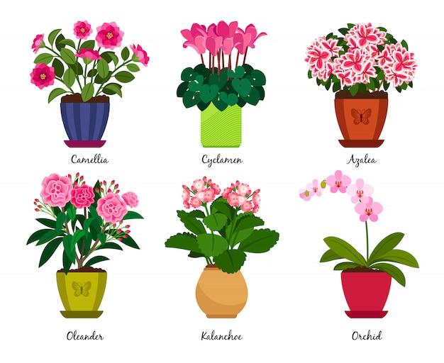 Vasos de flores e flores de planta de casa em vasos