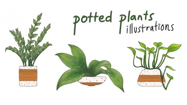 Vasos de plantas vaso bonito colorido mão ilustrações desenhadas