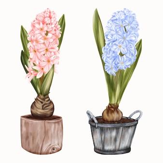 Vasos de primavera com jacintos de flores azuis e amarelas