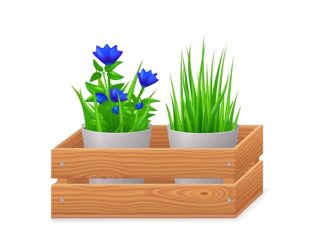 Vasos para flores em caixa de madeira, isolados no fundo branco. caixa de jardim 3d com flores azuis e grama verde em vasos. cesta realista de vetor de madeira marrom com plantas em vista frontal