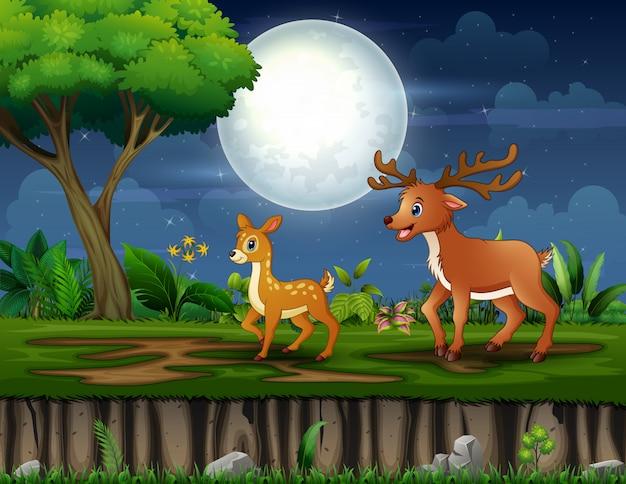 Veado de mãe dos desenhos animados e seu filhote andando à noite