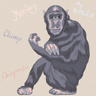 Vector cartoon engraçado macaco chimpanzé