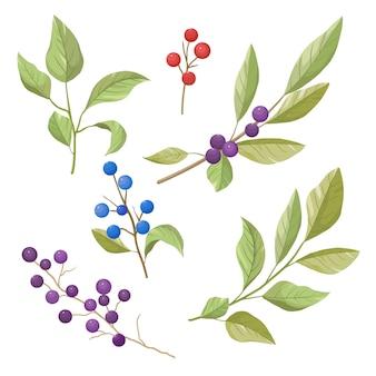 Vector conjunto de folhas