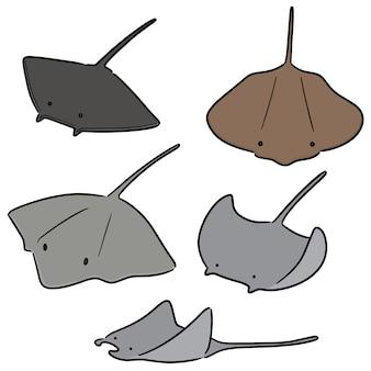 Vector conjunto de peixe raio