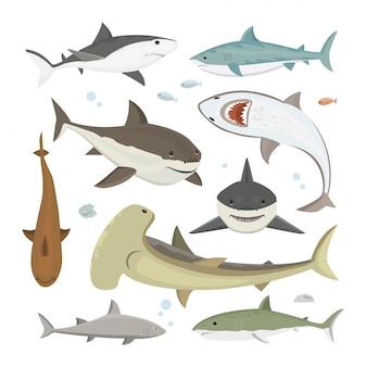 Vector conjunto de pose diferente de tubarão.