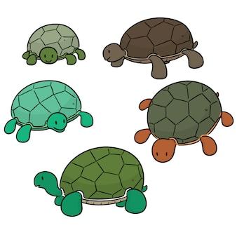 Vector conjunto de tartaruga