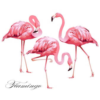 Vector de conjunto de flamingos de pássaros tropicais.