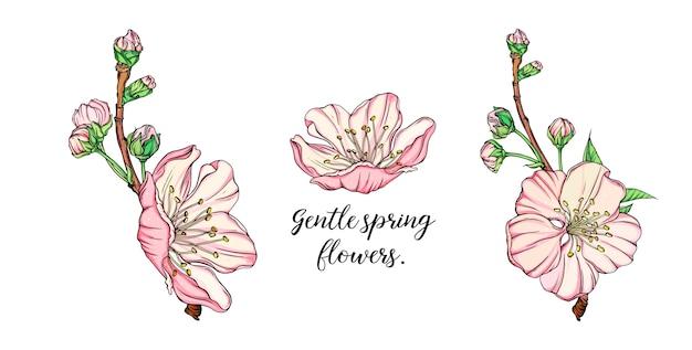 Vector delicado arranjo de flores de primavera