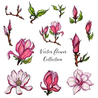 Vector flor brilhante coleção de flores de magnólia e botões