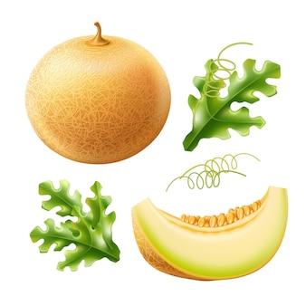 Vector melão redondo realista com fatia conjunto de deliciosas frutas doces Vetor Premium
