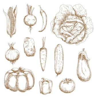 Vegetais agrícolas saudáveis